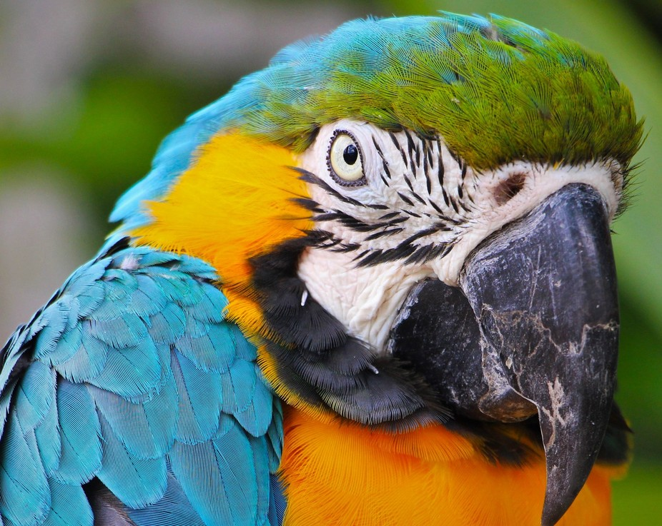 Marwell Parrot