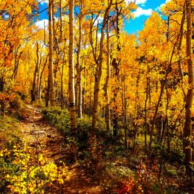 Took a hike through the Kensha Pass area in Colorado by Jeffferson Lake.  I love aspens this time of year.