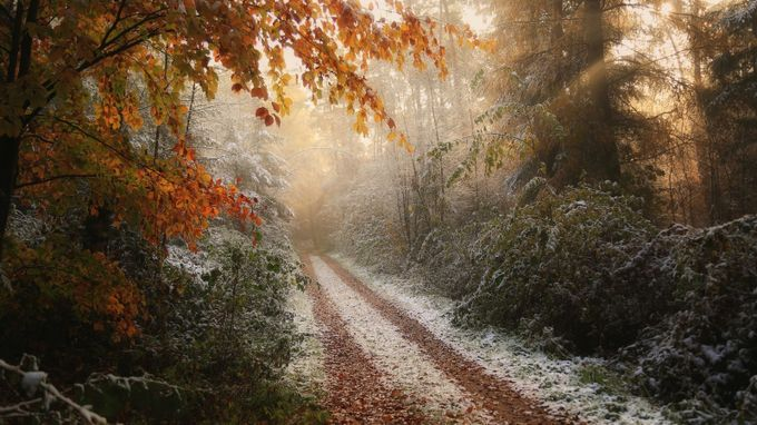 Frosty Fall by vincentcroce - Diagonal Compositions Photo Contest