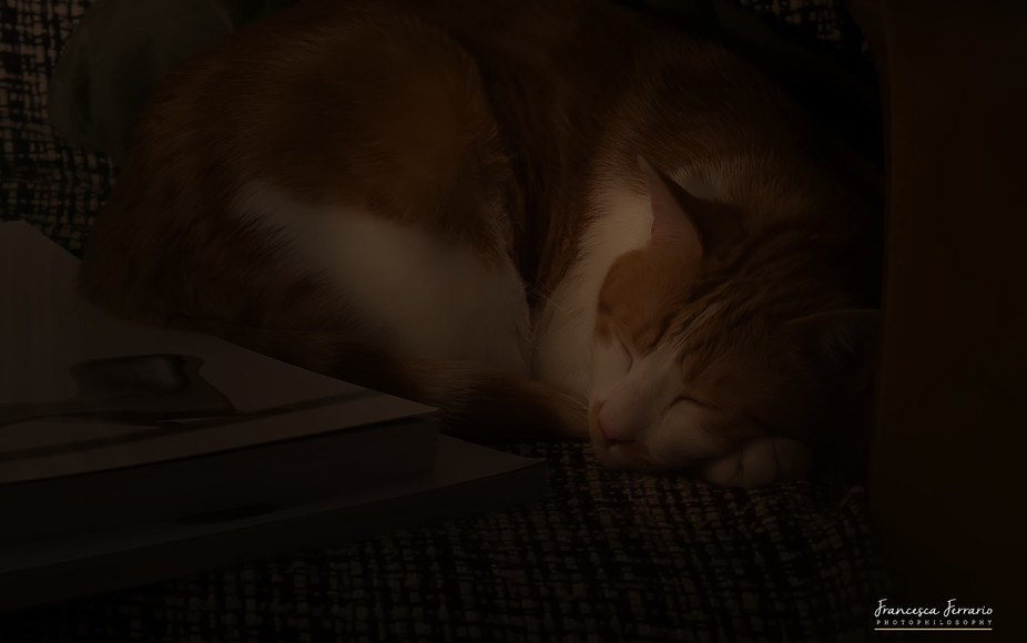 My cat was sleeping on the couch near my desk, where I was making some macro photos. When I looke...