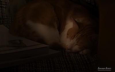 Sweet dreams, my lil boy.