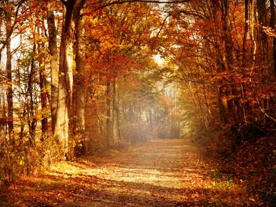 Autumn Light~
