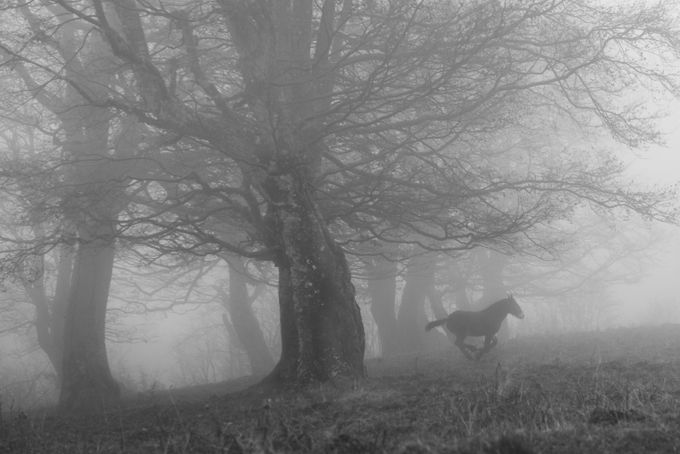 Running through the beeches by Gilmour82 - Mysterious Shots Photo Contest