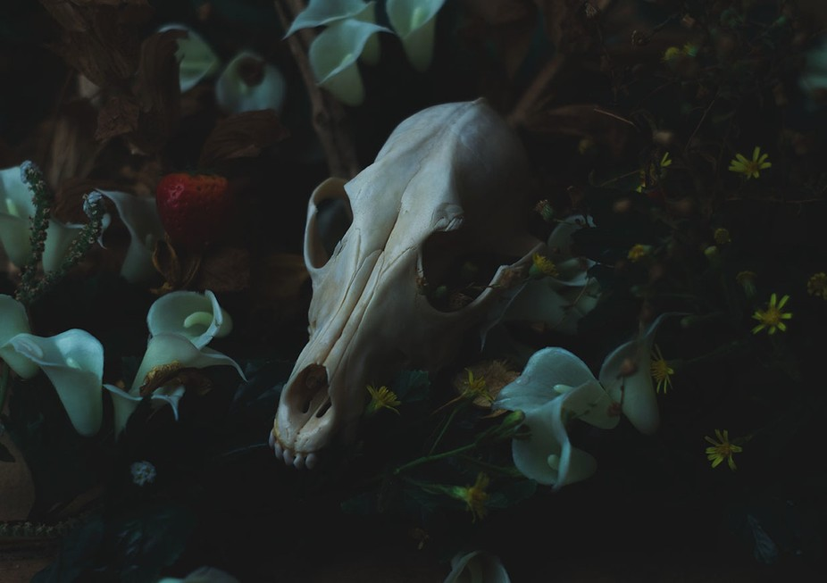 All bone animals photographed in this project have been treated with the utmost respect. They hav...