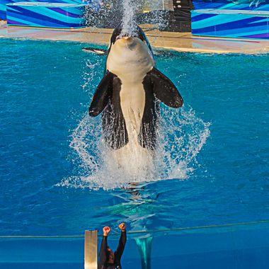 20161112  SeaWorld  228