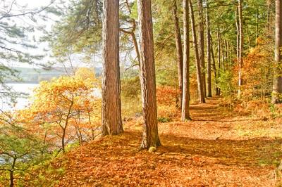 Autumn Arboreal Amble