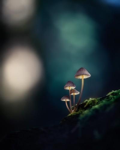 Glow by Theo-Herbots-Fotograaf