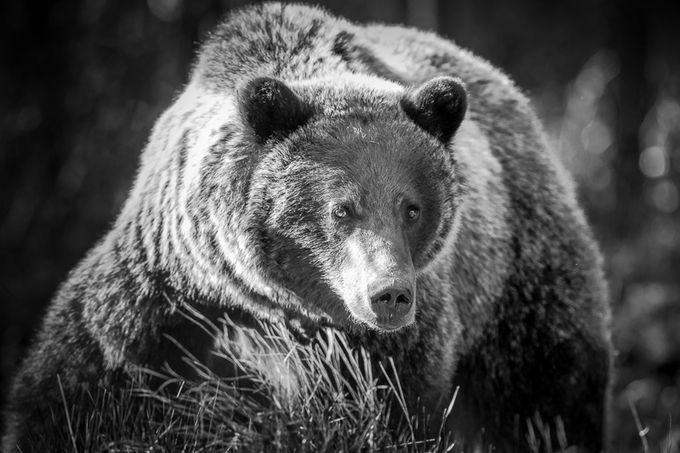"""Too Close"" by HarryC - Bears Photo Contest"