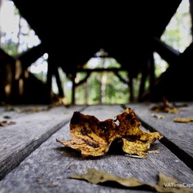 First leaves of Fall lay scattered on the timbers of a hand made covered bridge in Powhatan Virginia.