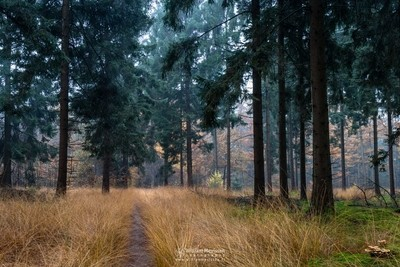 Narrow Forest Path