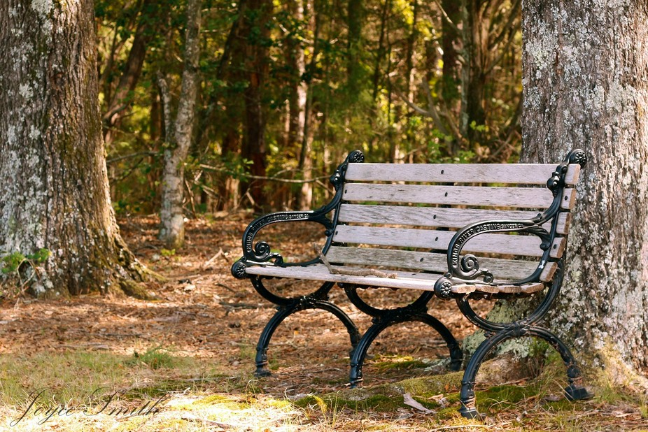 A bench on the edge of the woods at Andrew Jackson State Park, SC