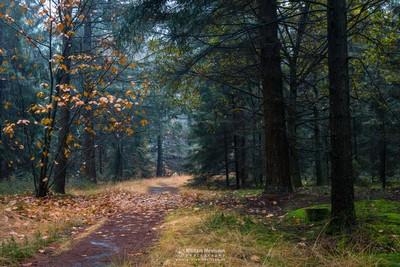 Lost Oak