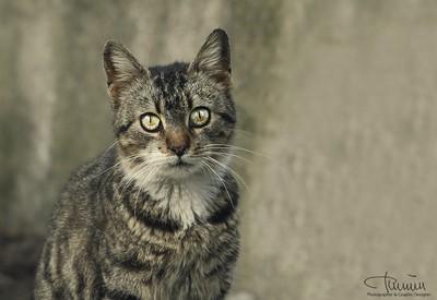 Istanbull street cat