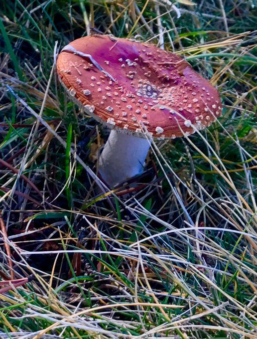 A Mushroom from Fairytales