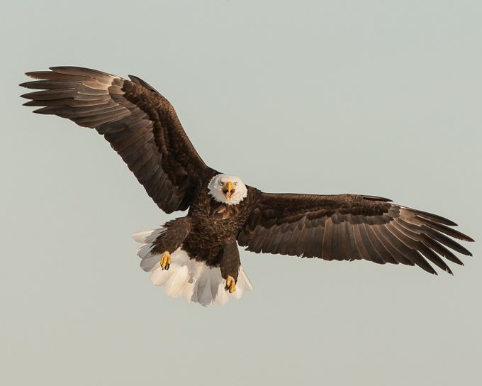 Attitude by Joecf - Just Eagles Photo Contest