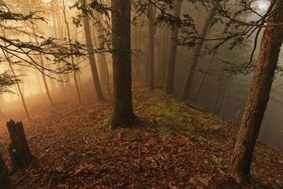 Als je mijn foto's leuk vindt, zie mijn website op- shavershots.com door Theo-Herbots-Fotograaf