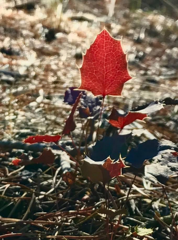 Fall jewel