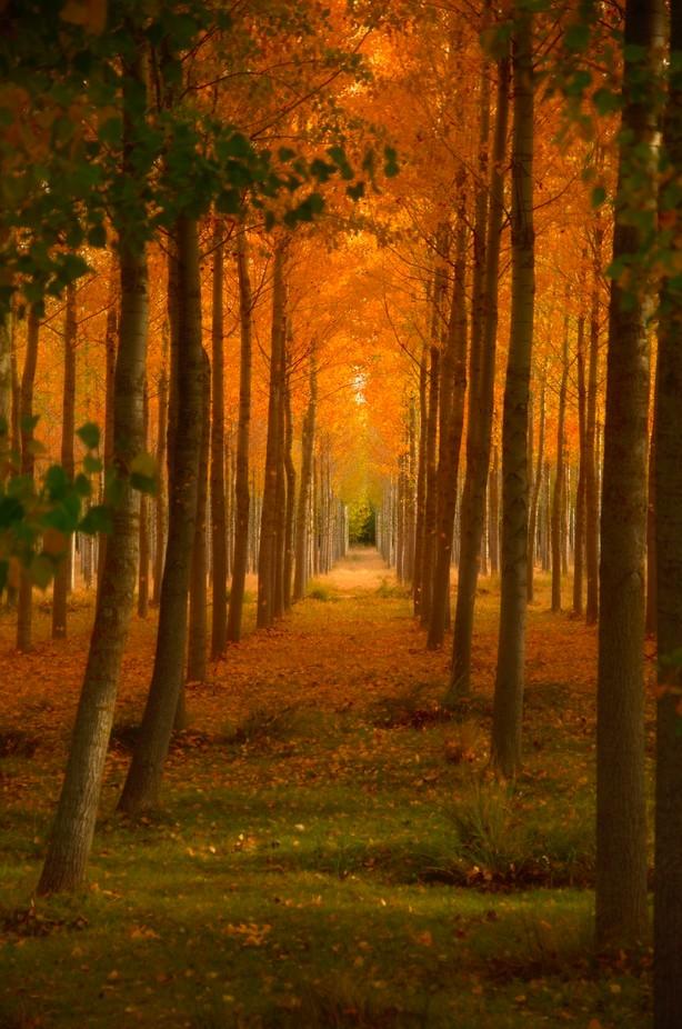Fall in love by cristinamorenilla - Orange Is The Color Photo Contest