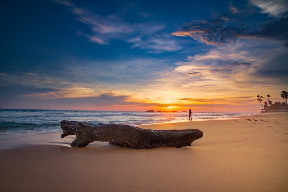 I was initially planning to take a picture of the sunset with this piece of wood, but then this l...