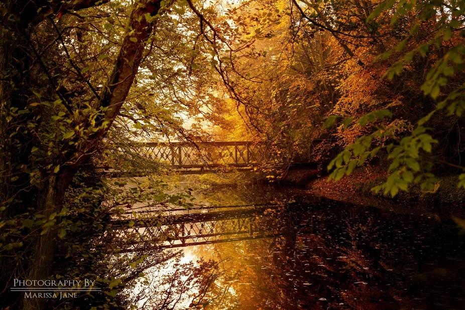 Falling reflections