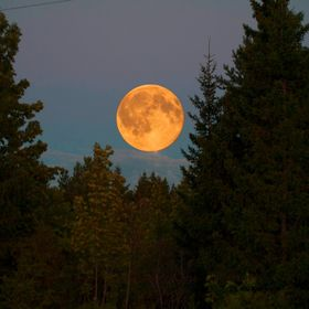 Was staggered with the sight of a giant moon glaring at me from between the forest. Ran to get my camera from the cottage and took this shot, edi...
