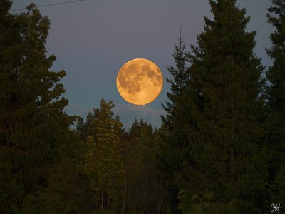 Super moon peeking from behind a forest.