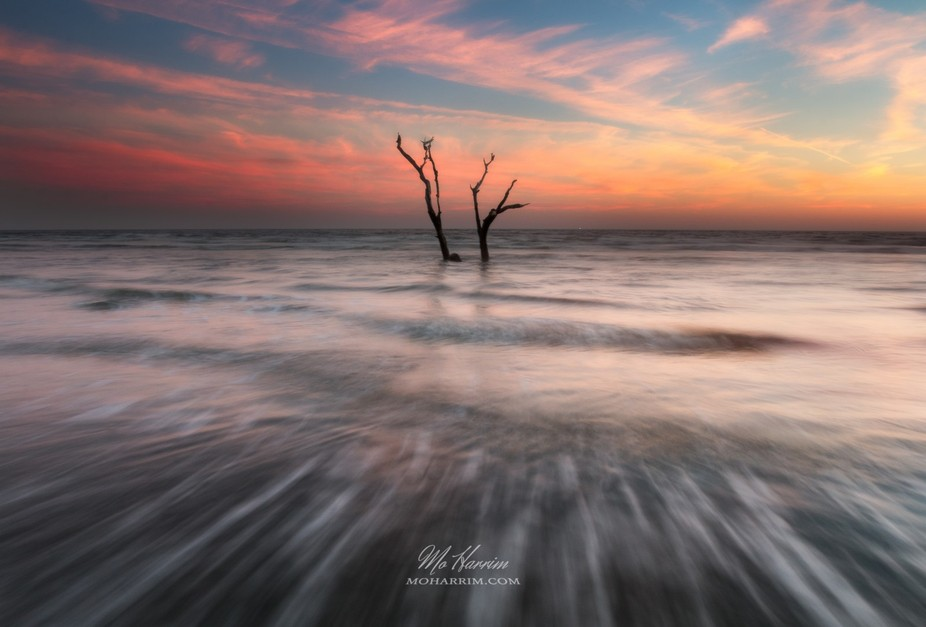 The dead tree in the ocean in Folly Beach, South Carolina