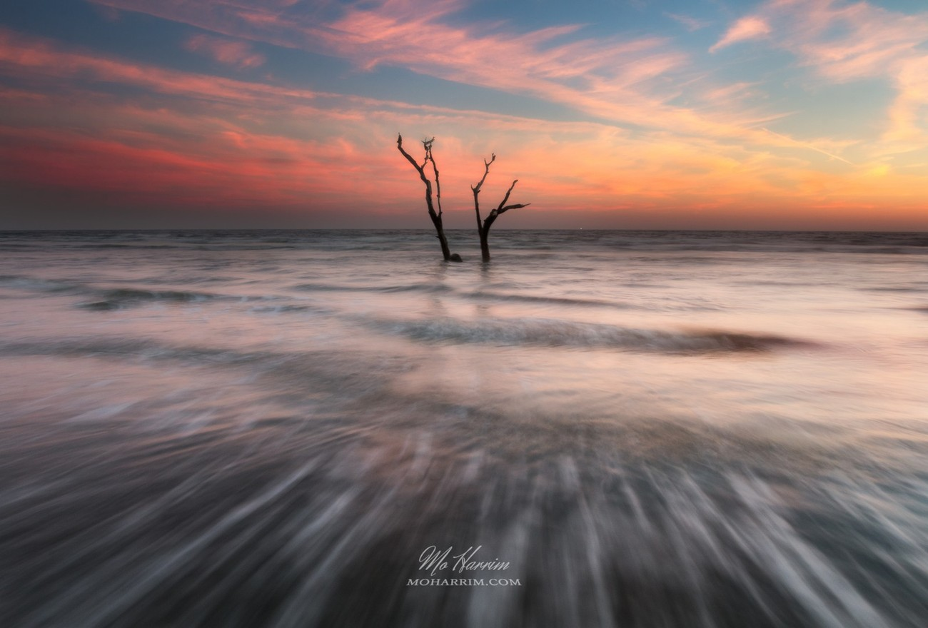 Tree Silhouettes Photo Contest Winners
