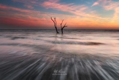 The Ocean Tree