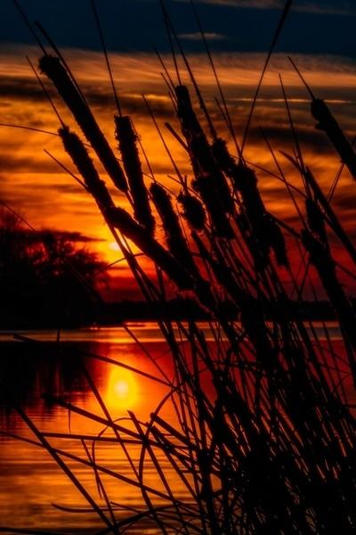 Sunset Landscape.