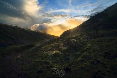 Golden Light in Sierra Nevada
