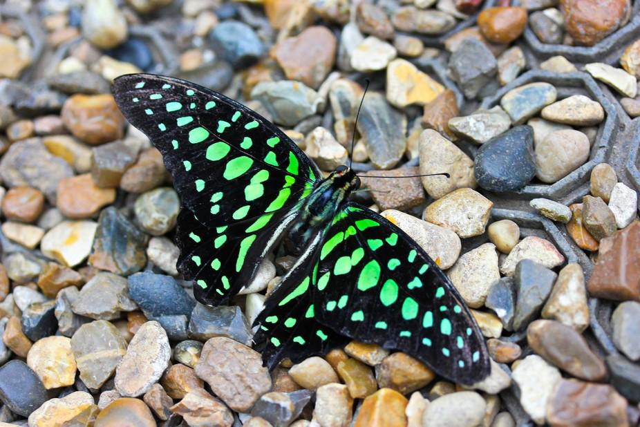 Beautiful butterfly taking a rest