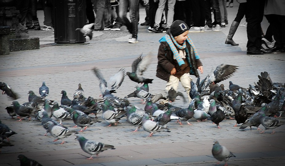 I cathed this boy playing with the doves in the town square in Krakov. The boy seemed to ahve suc...