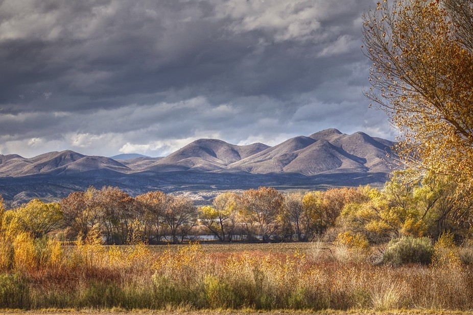 Bosque del Apache  New Mexico