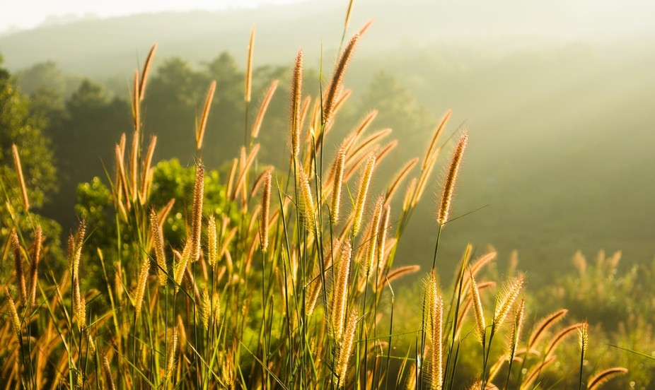 Shot near Umiam Lake. The morning sun lit up the whole valley bringing warmth to a rather cold mo...