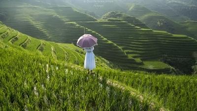Rice Terrace Dreams