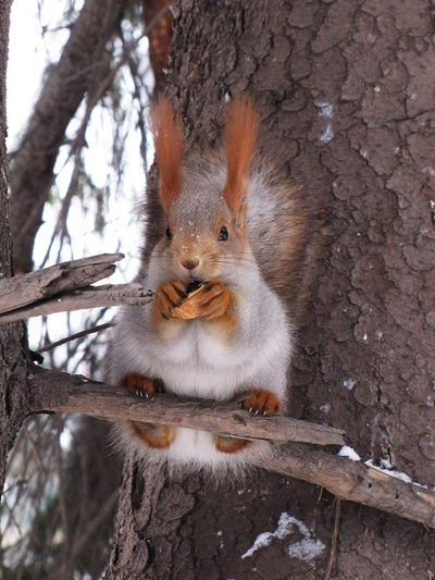 It is my walnut