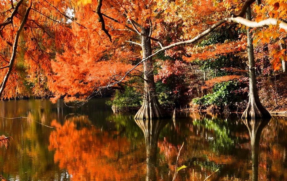 Fabulous Fall Colors