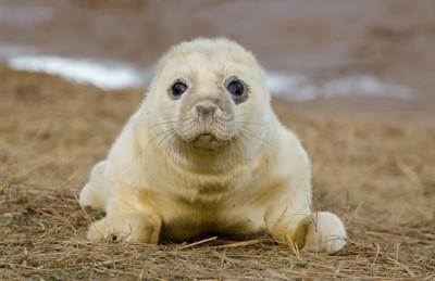 Seal Portrait