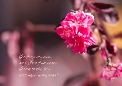 "I lift up my eyes, and I too find peace. I look to the day with hope in my heart. (from ""Saviour"")"