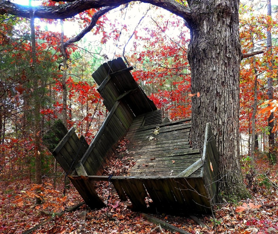 Collapsing tree fort in the back woods.
