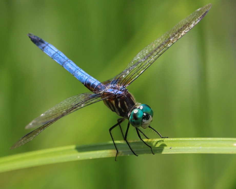 dragon fly (2)
