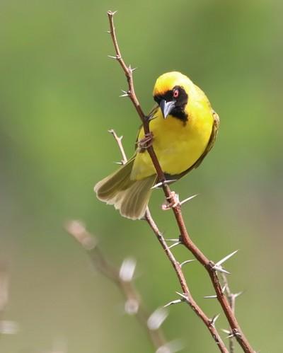 Bird on twig