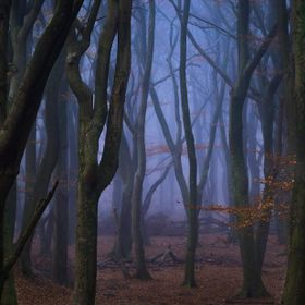 These dancing trees are just epic, especially the mood it gives during foggy conditions, reminds me of the show Stranger Things