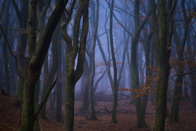 Stranger Things by vincentfennis - Dark Forests Photo Contest