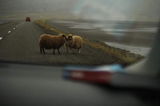 Viking sheeps by RubenSeca - A Road Trip Photo Contest