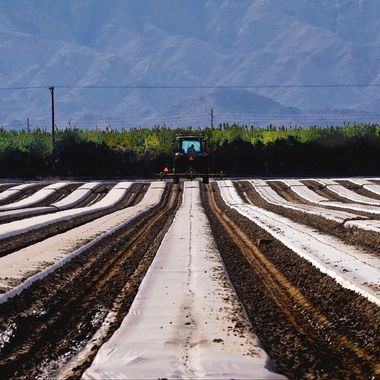 The Coachella Valley is not only the Southern gateway to Palm Springs, but a vast agriculture community. Dates, grapes and other commodities are grown in the area.
