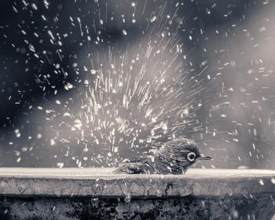 Bath time for birds...