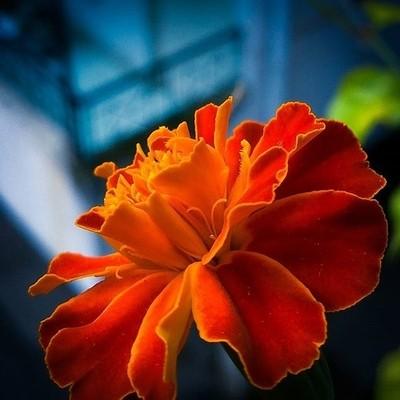 Flowers_rd01