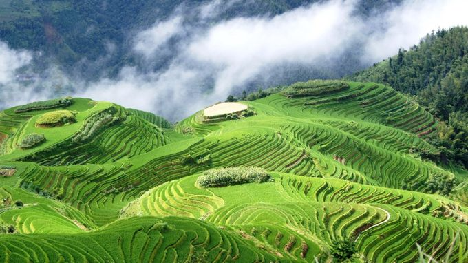 Rice Terrace by samymoon - Earth Day 2017 Photo Contest
